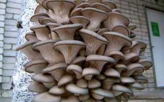 Выращивание лука и грибов в гараже
