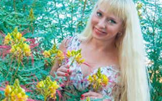 Быстрорастущие хвойные растения для живой изгороди