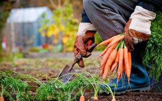 Как правильно сделать овощную яму в гараже